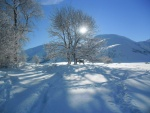 Horse under sycamore in winter sun.jpg